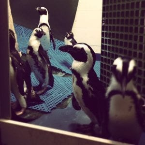 meeting penguins in New Orleans | New Orleans Moms Blog