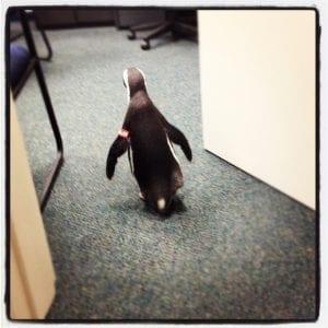penguin experience at the New Orleans aquarium