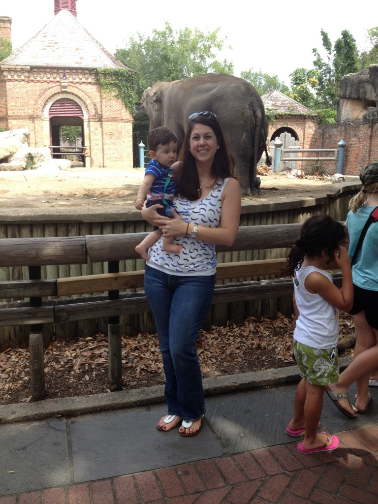 Checking out the elephants at Audubon Zoo