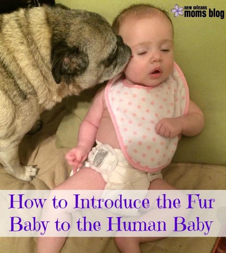 Fur Baby Human Baby