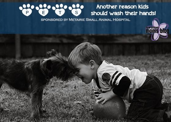 Pets-why kids should wash their hands I New Orleans Moms Blog (1)