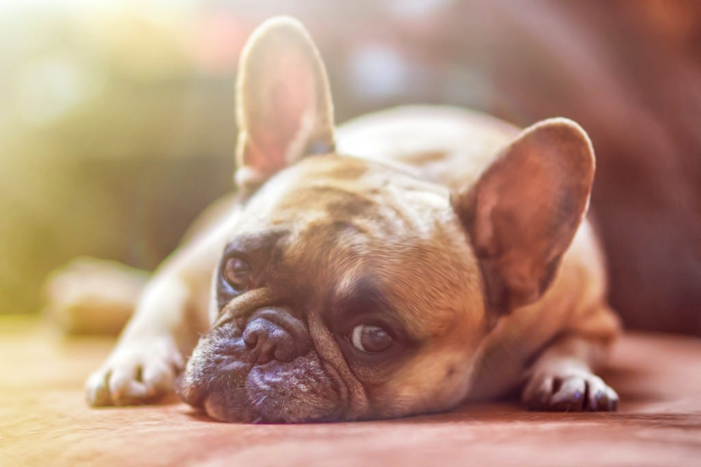 Four Easy Pet Safety Rules For Families
