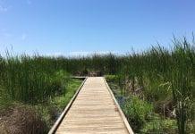 Alligator Marsh Walk